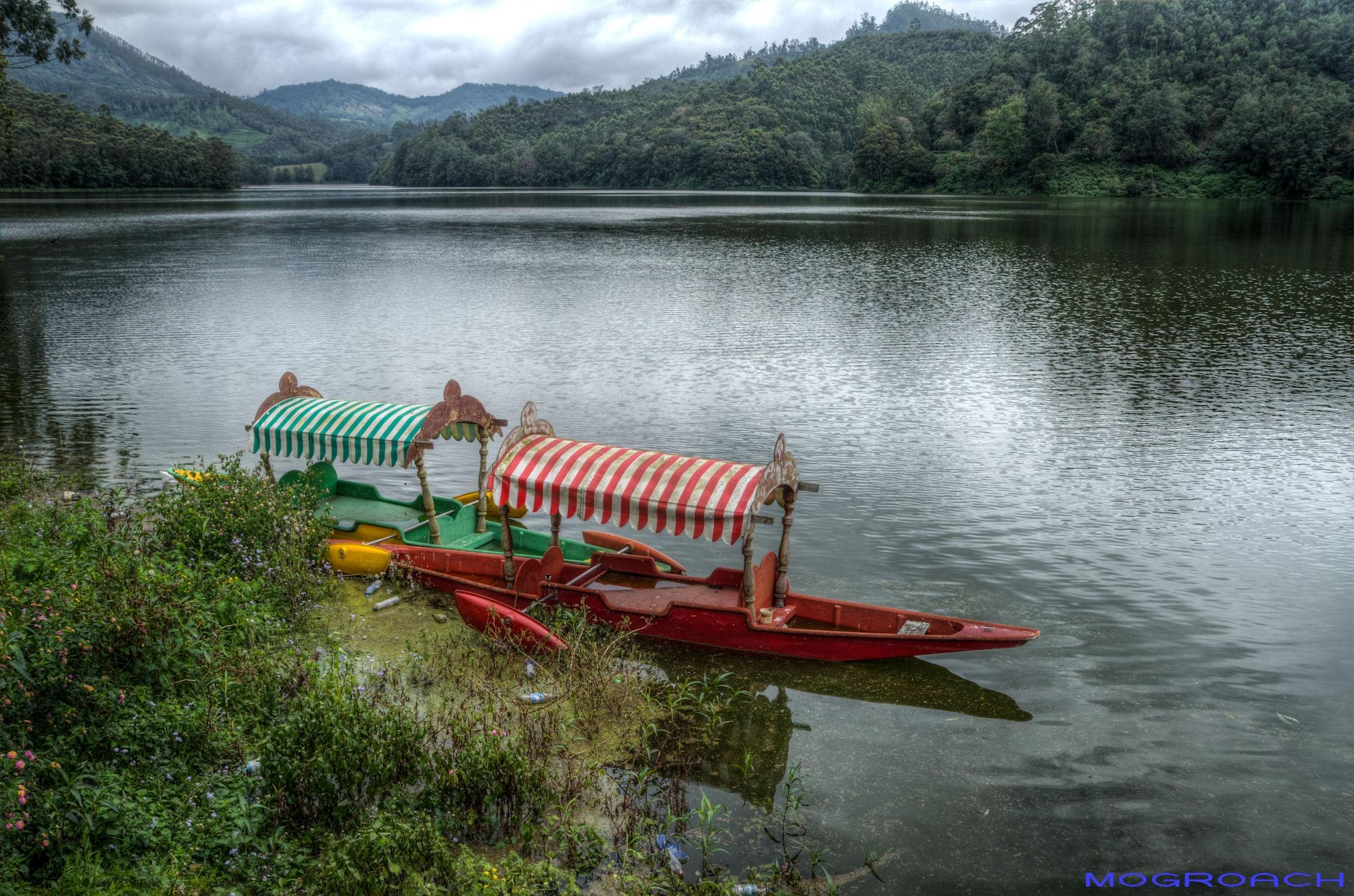 Indien Munnar Kerala