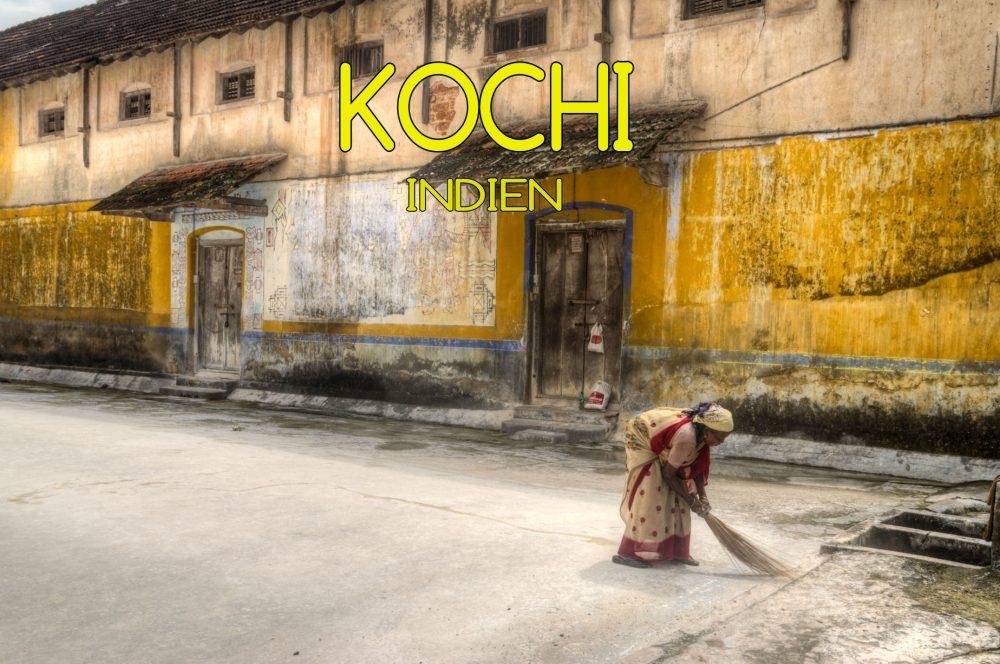 Kochi Kerala Indien Mogroach